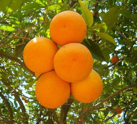 эфирнок масло апельсина